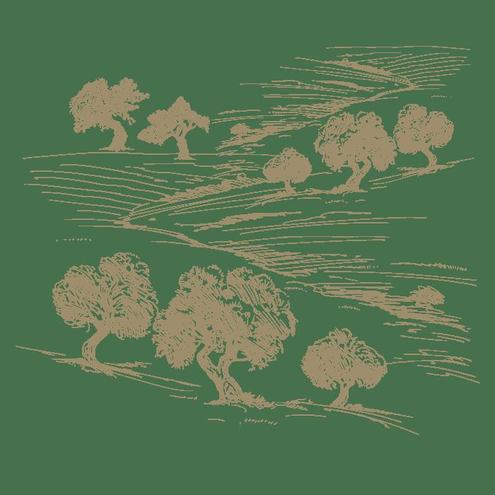 Sarafino Olive Trees